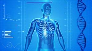 human-skeleton-163715_640